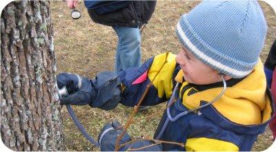 Puutüves mahla liikumise uurimine stetoskoobiga