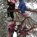 MUUDETUD_talvel puu otsa
