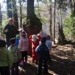 metsaemapuu